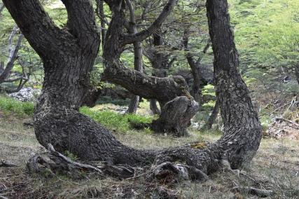 Bifurcated and twisted trunks
